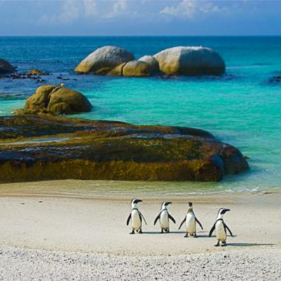 Honeymoon in the Western Cape, South Africa